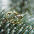 Wedding rings on a Christmas tree branch — Stockfoto