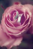 Anéis de casamento nas rosas — Foto Stock