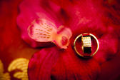 Wedding rings in flowers background — Stok fotoğraf