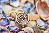 Wedding rings on shells — Stock Photo