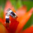wedding rings in flowers  — Stock Photo