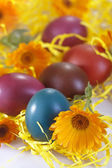 Colored egg — Stock Photo
