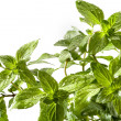 Basil — Stock Photo #29813049