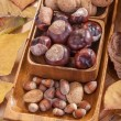 Walnuts, chestnuts, hazelnuts and almonds — Stock Photo #33256375