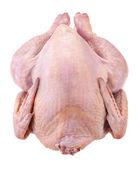 Tavuk üzerinde beyaz izole — Stok fotoğraf