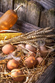 Eggs in the straw — Stock Photo