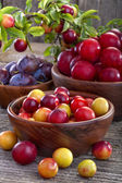 Sloes and plums — Stock Photo