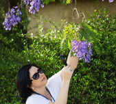 Botanist watching the jacaranda flowers — Stock Photo
