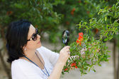 Botanist checking the growth of pomegranate flowers — Stock Photo