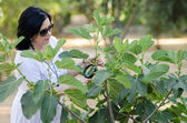 Botanist checking the growth of figs — Stock Photo