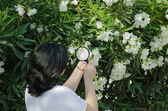 Botanist watching the oleander flowers on the tree — Stock Photo
