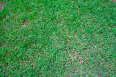 Green grass background texture. — Foto Stock