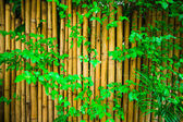 Yellow bambooand green leaf fence, background — Stock Photo