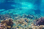 Coral Reef Scene with Tropical Fish in sunlight — Foto Stock