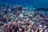 Coral Reef Scene with Tropical Fish in sunlight — Stockfoto