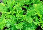 A fern — Stock Photo
