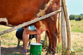 Milkmaid milking a cow horizontal — Stock Photo