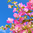 Pink flowers and blue sky — Stock Photo