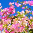 Pink flowers on a background of the sky — Stok fotoğraf