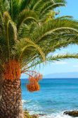Palmera en la playa — Foto de Stock
