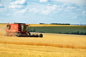 Red combine harvests wheat in a field — 图库照片