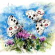 Stock Photo: Apollo butterfly, illustration