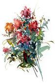 Rose, illustration — Stock Photo
