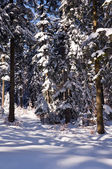 Winter and frosty sunny day in the middle of the forest — Foto Stock