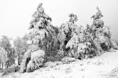 Winter in the mountain forest in black and white — Stock fotografie