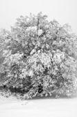 Inverno na floresta de montanha em preto e branco — Fotografia Stock
