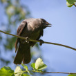 Stock Photo: Crow on branch