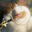 Whiskers cat — Stock Photo #29897533