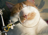 Whiskers cat — Stock Photo
