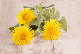 Dandelion on an old wooden table — Stock Photo