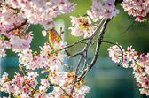 Un pájaro en flores — Foto de Stock