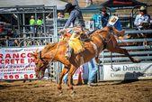 Rodeio — Fotografia Stock