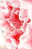 Floração rosa azaléia — Foto Stock