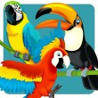 Parrots collection — Stock Photo #28099865
