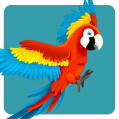 Cute macaw cartoon flying — Photo