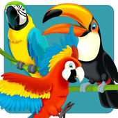 Parrots collection — Stock Photo