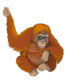 Cartoon Orangutan ape — Stock Photo