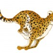 Cheetah — Stock Photo #40617923