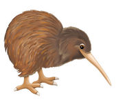 Kiwi bird — Stock Photo