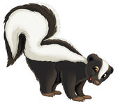 Skunk — Stock Photo