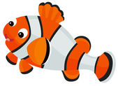 Tropical clown fish — Stock Photo