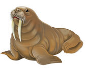 Walrus illustration — Stock Photo