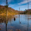 Evening light on a marshy area in Calvert Cliffs State Park, alo — Stock Photo #27064627