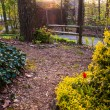 Spring garden scene under evening light — Stock Photo