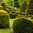 Topiary garden at Longwood Gardens, PA. — Stock Photo