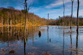 Evening light on a marshy area in Calvert Cliffs State Park, alo — Stock Photo